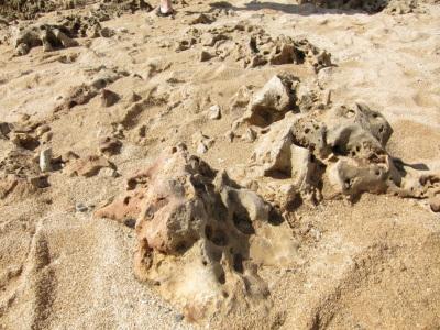 溶岩? サンゴ?