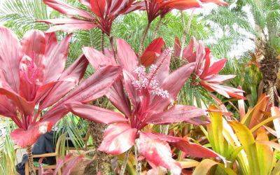 真っ赤な植物