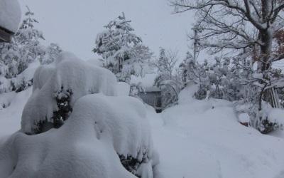雪がやべぇ