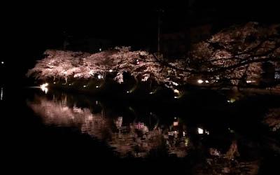 堀に映る桜