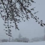 春の雪がひどい