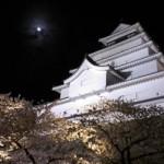 鶴ヶ城へ夜桜を見てきた